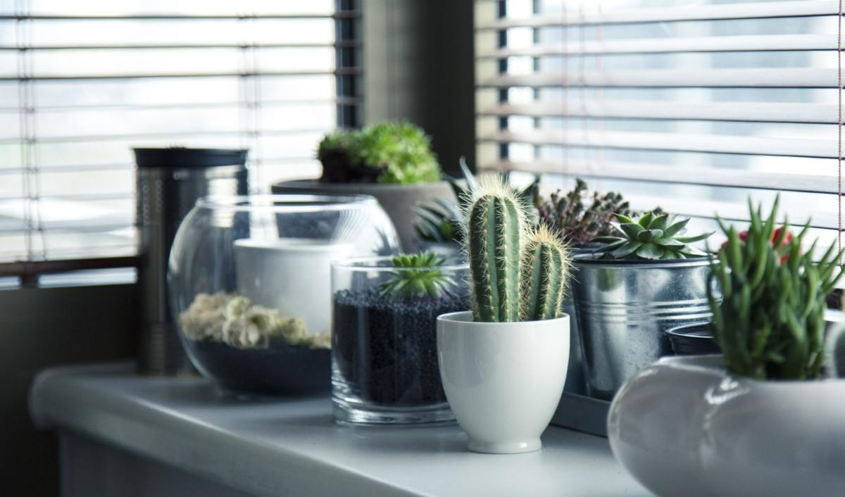 10 лучших домашних растений, не требующих ухода