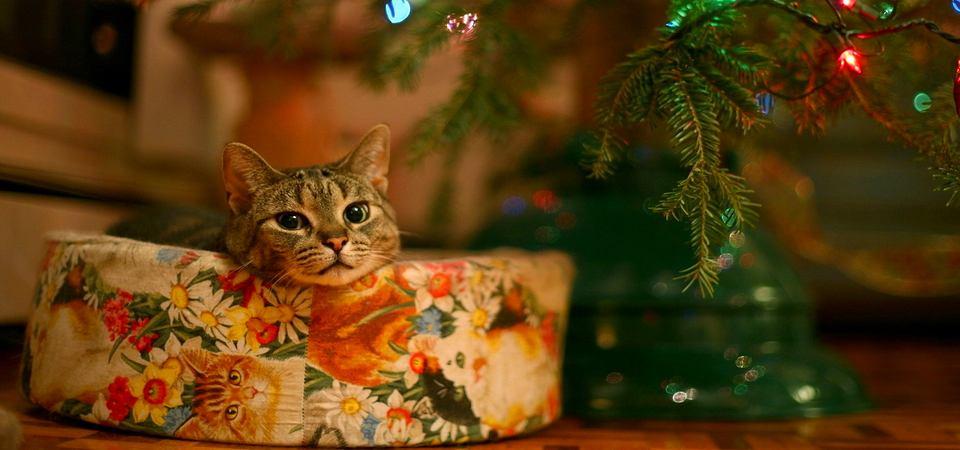 Что подарить женщине на Новый год: 11 подарков для дома
