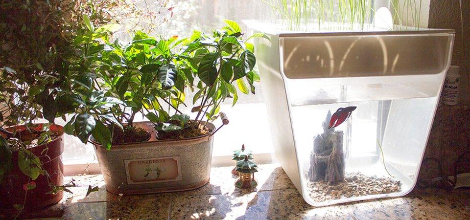 Акваферма, или Как вырастить зимой зелень без постоянного ухода