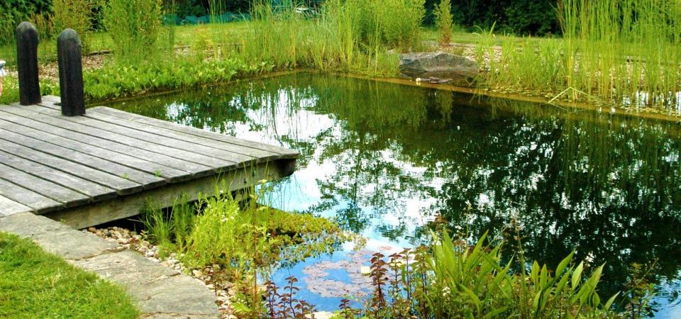 Как ухаживать за искусственным водоемом летом?