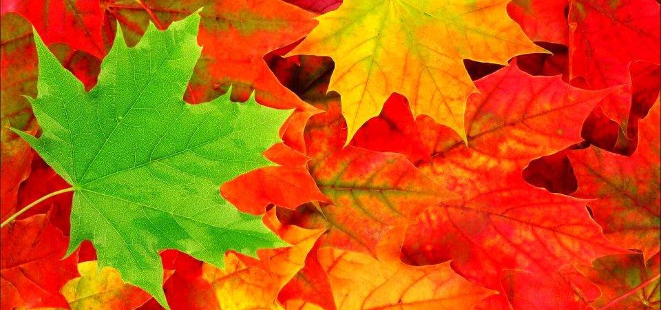 Цвета осени: как украсить дом листьями
