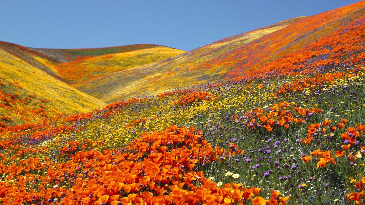 Ландшафт в цветах: красный, оранжевый, желтый, голубой, бордовый. Ландшафт в .