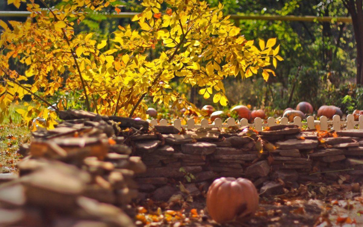 Какие деревья и кустарники сажают в начале осени