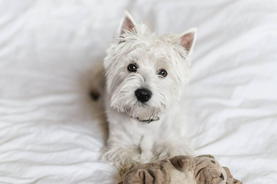 Зайцев из ИKEA перестали выпускать, и московский пёс впал в депрессию