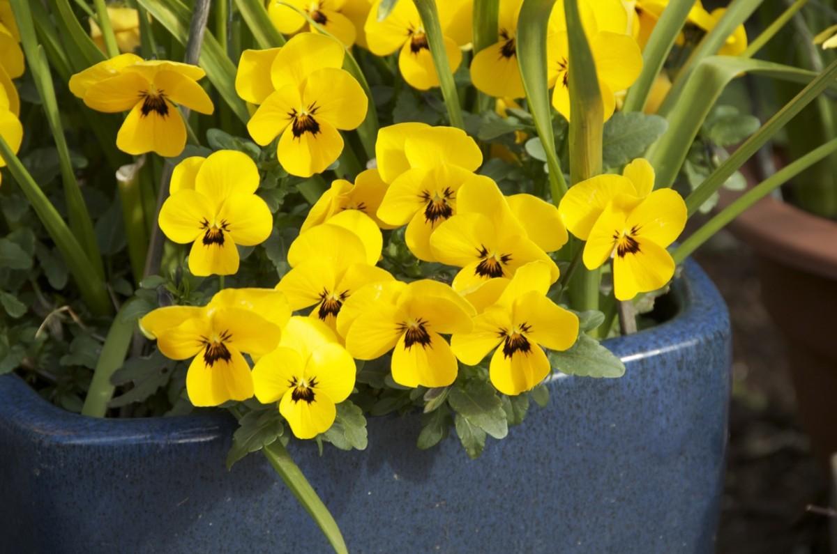 Тенелюбивые цветы: 15 растений для балкона на северной стороне