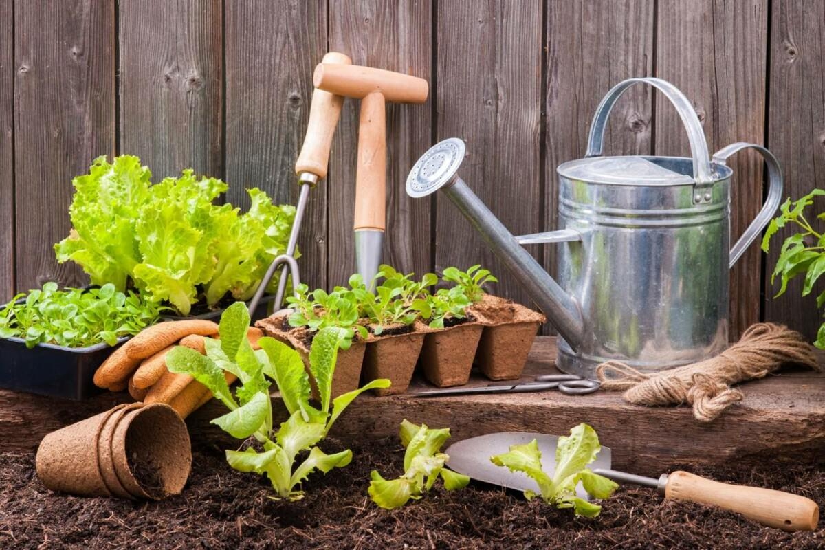 Первая рассада: с чего начать и как выбрать семена — инструкция для новичка